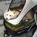 亞亞的上聯台北寵物用品博覽會 (15).jpg