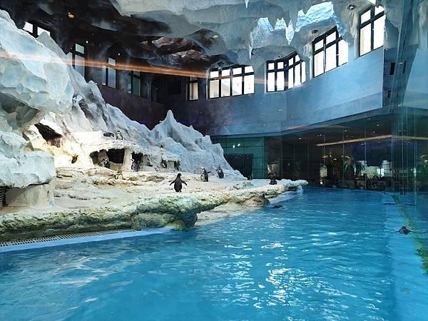 中國廣東省長隆企鵝酒店:帝企鵝自助餐廳 (7).jpg
