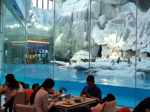 中國廣東省長隆企鵝酒店:帝企鵝自助餐廳 (4).jpg