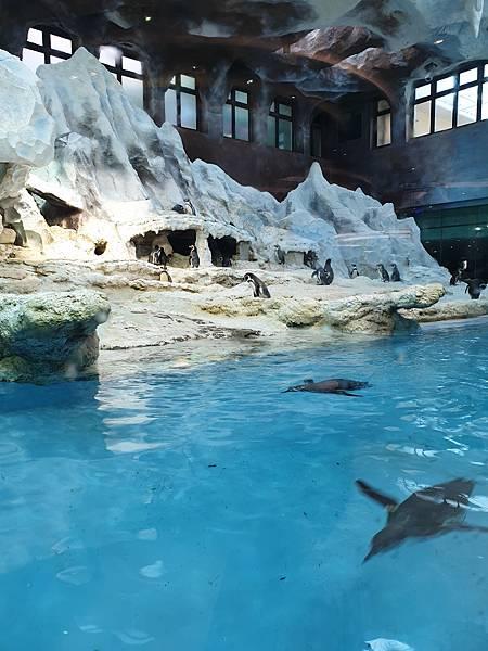 中國廣東省長隆企鵝酒店:帝企鵝自助餐廳 (8).jpg