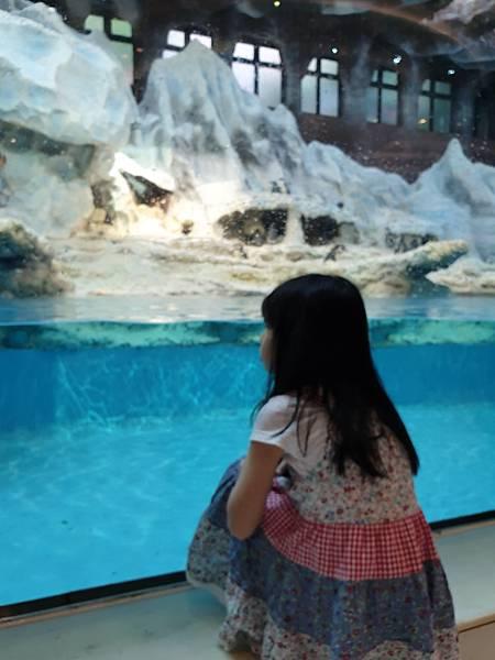 中國廣東省長隆企鵝酒店:帝企鵝自助餐廳 (10).jpg