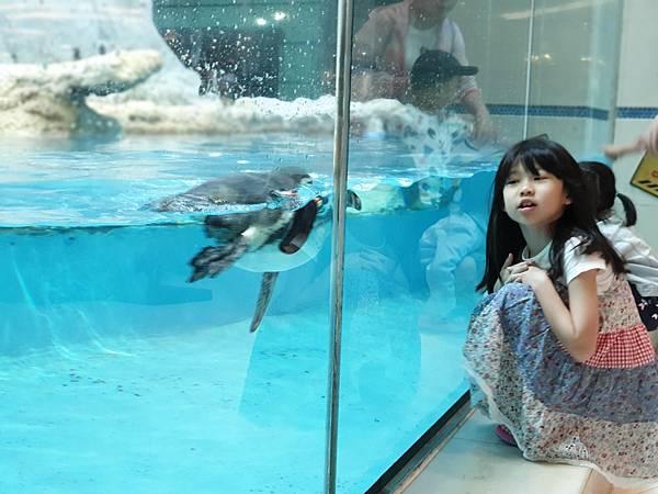 中國廣東省長隆企鵝酒店:帝企鵝自助餐廳 (12).jpg