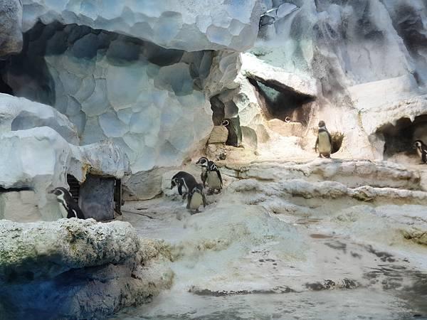 中國廣東省長隆企鵝酒店:帝企鵝自助餐廳 (19).jpg