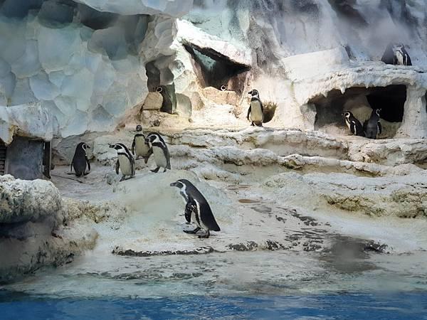 中國廣東省長隆企鵝酒店:帝企鵝自助餐廳 (20).jpg