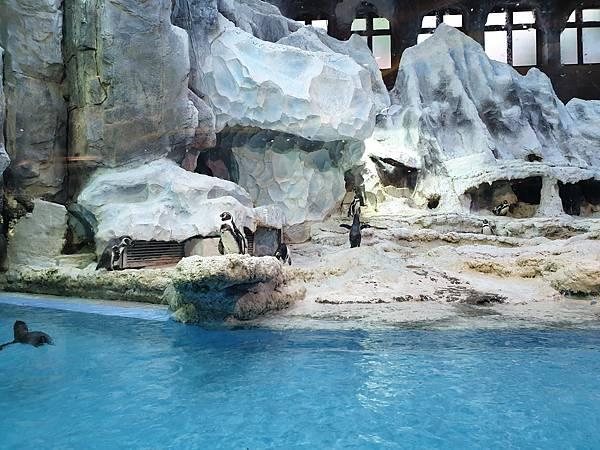 中國廣東省長隆企鵝酒店:帝企鵝自助餐廳 (45).jpg