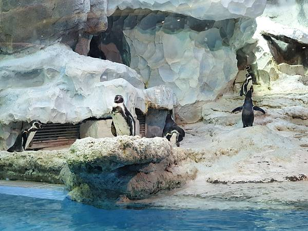 中國廣東省長隆企鵝酒店:帝企鵝自助餐廳 (46).jpg