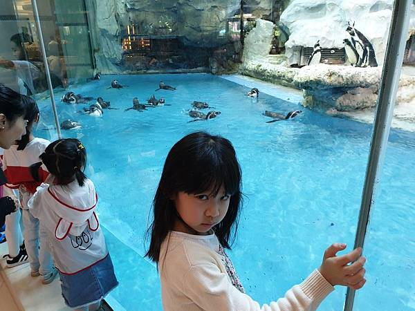 中國廣東省長隆企鵝酒店:帝企鵝自助餐廳 (49).jpg