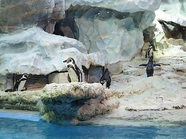 中國廣東省長隆企鵝酒店:帝企鵝自助餐廳 (47).jpg