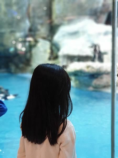中國廣東省長隆企鵝酒店:帝企鵝自助餐廳 (53).jpg