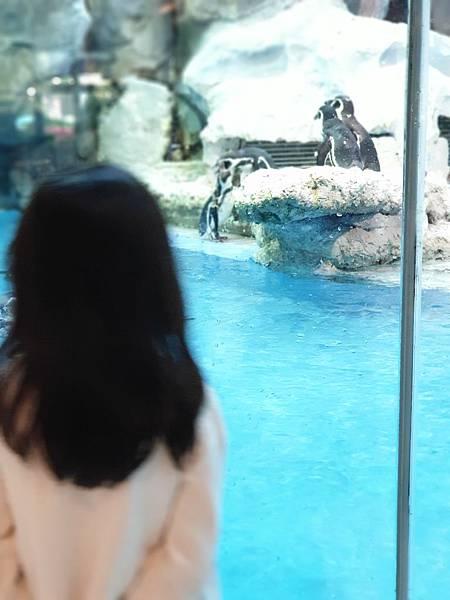 中國廣東省長隆企鵝酒店:帝企鵝自助餐廳 (54).jpg