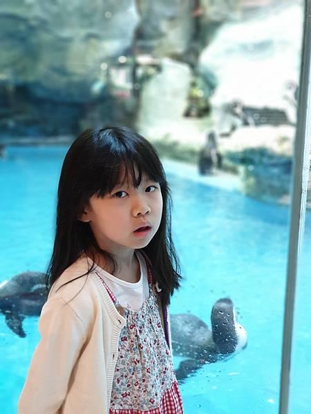 中國廣東省長隆企鵝酒店:帝企鵝自助餐廳 (55).jpg