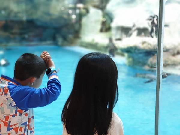 中國廣東省長隆企鵝酒店:帝企鵝自助餐廳 (50).jpg