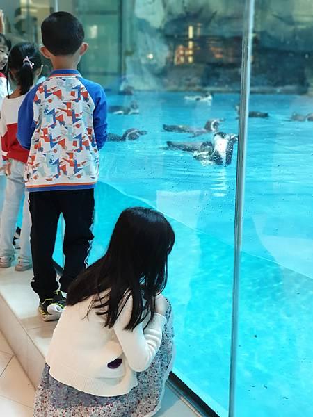 中國廣東省長隆企鵝酒店:帝企鵝自助餐廳 (57).jpg