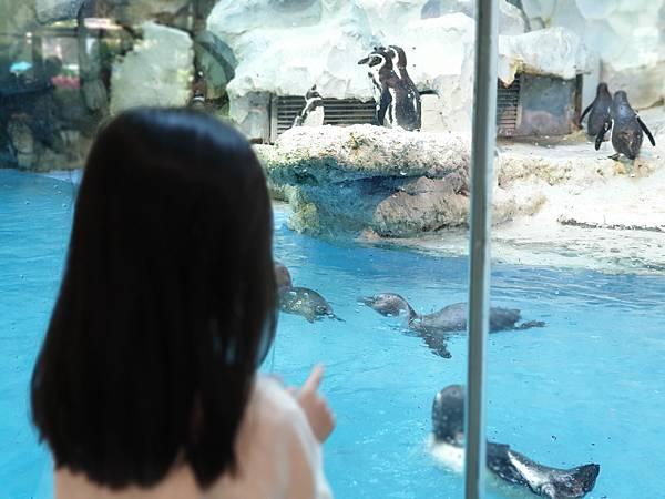 中國廣東省長隆企鵝酒店:帝企鵝自助餐廳 (51).jpg