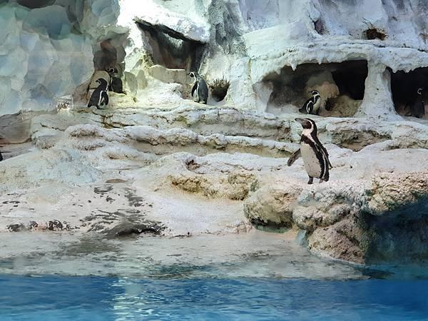 中國廣東省長隆企鵝酒店:帝企鵝自助餐廳 (59).jpg