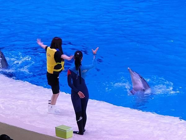 中國廣東省長隆海洋王國:海豚劇場 (8).jpg