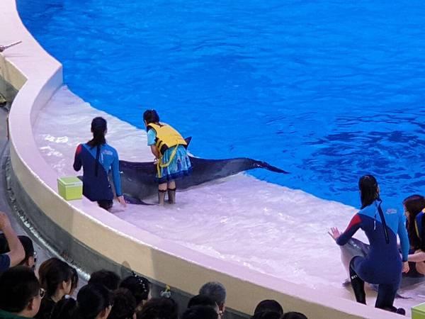 中國廣東省長隆海洋王國:海豚劇場 (11).jpg
