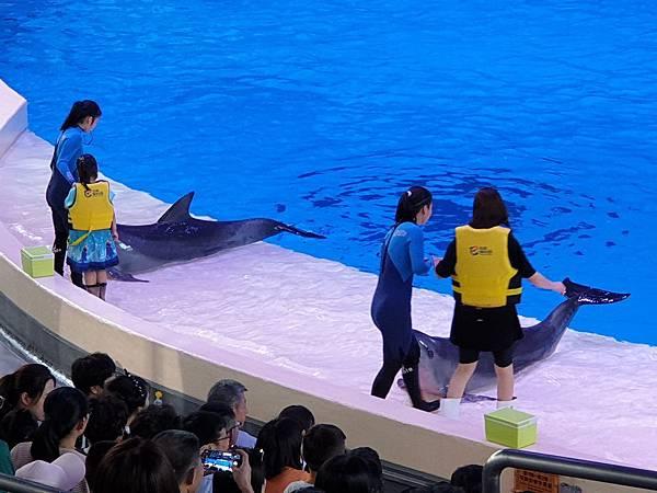 中國廣東省長隆海洋王國:海豚劇場 (12).jpg