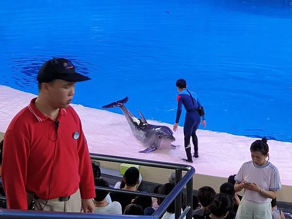 中國廣東省長隆海洋王國:海豚劇場 (26).jpg