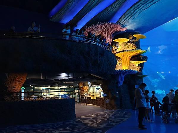 中國廣東省長隆海洋王國:鯨鯊館 (2).jpg