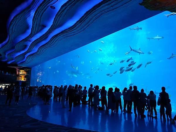 中國廣東省長隆海洋王國:鯨鯊館 (4).jpg