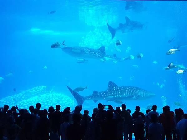 中國廣東省長隆海洋王國:鯨鯊館 (1).jpg