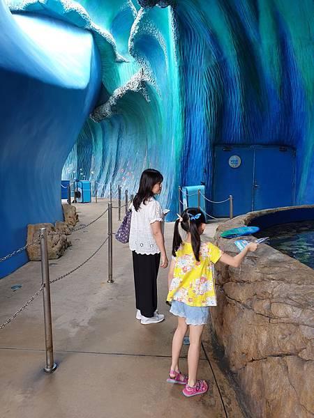 中國廣東省長隆海洋王國:鯨鯊館 (20).jpg