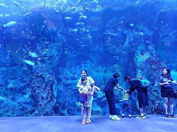 中國廣東省長隆海洋王國:鯨鯊館 (37).jpg