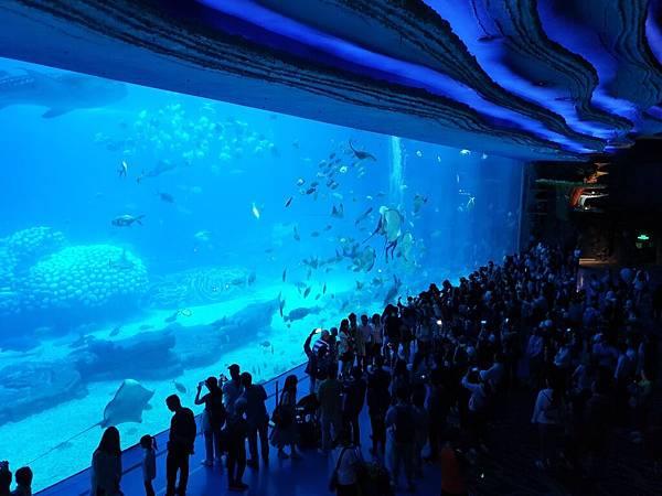 中國廣東省長隆海洋王國:鯨鯊館 (42).jpg