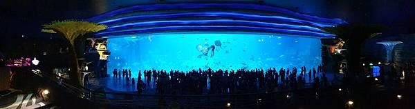 中國廣東省長隆海洋王國:鯨鯊館 (49).jpg