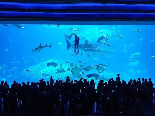 中國廣東省長隆海洋王國:鯨鯊館 (48).jpg