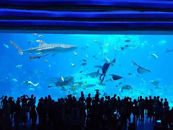 中國廣東省長隆海洋王國:鯨鯊館 (50).jpg