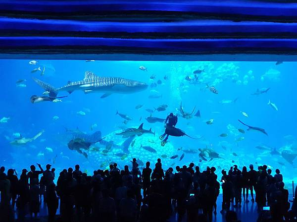 中國廣東省長隆海洋王國:鯨鯊館 (51).jpg