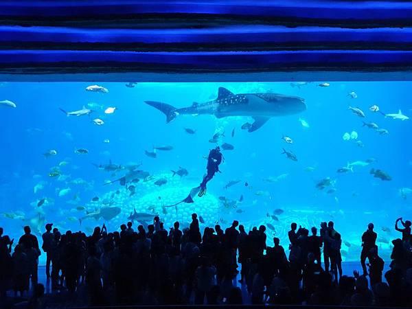 中國廣東省長隆海洋王國:鯨鯊館 (52).jpg