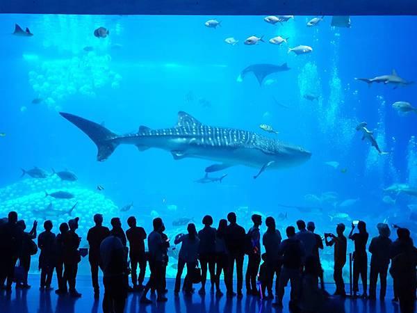 中國廣東省長隆海洋王國:鯨鯊館 (56).jpg