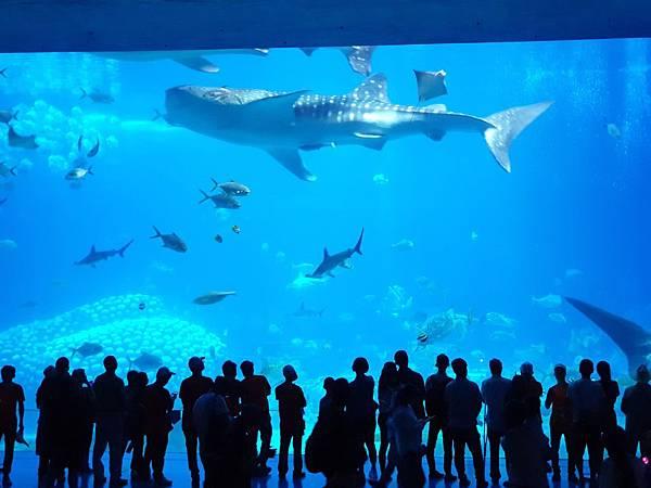 中國廣東省長隆海洋王國:鯨鯊館 (57).jpg