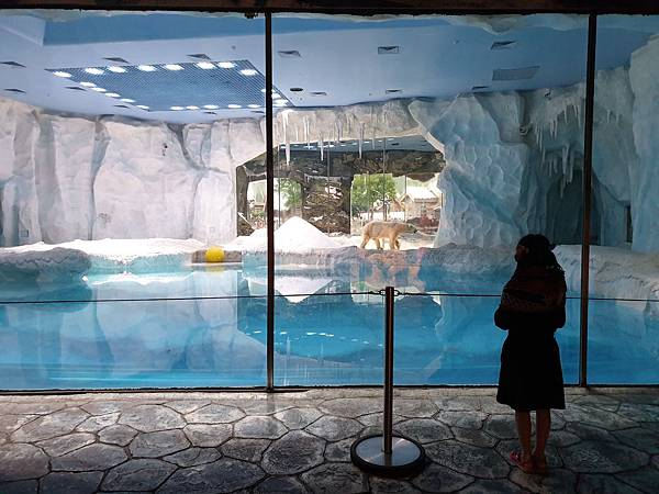 中國廣東省長隆海洋王國:北極熊館 (1).jpg