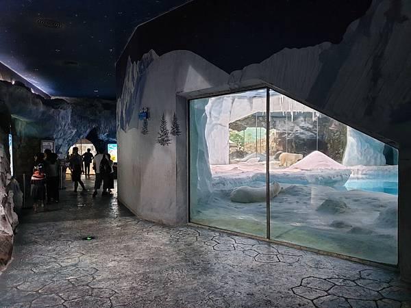 中國廣東省長隆海洋王國:北極熊館 (5).jpg