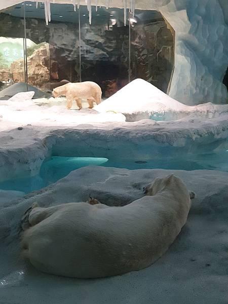 中國廣東省長隆海洋王國:北極熊館 (8).jpg