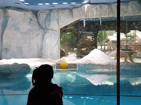 中國廣東省長隆海洋王國:北極熊館 (2).jpg
