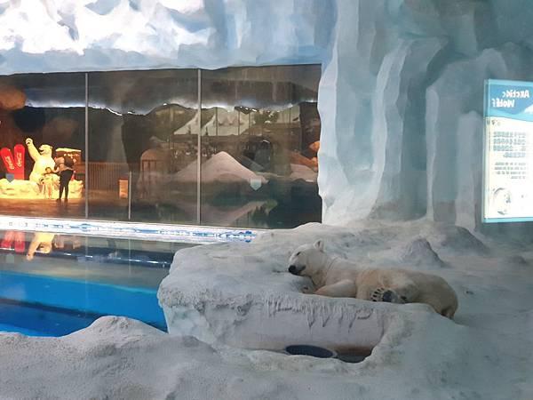 中國廣東省長隆海洋王國:北極熊館 (11).jpg