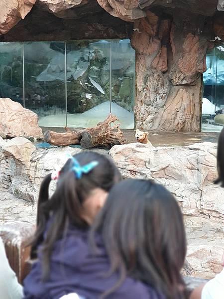 中國廣東省長隆海洋王國:北極熊館 (24).jpg
