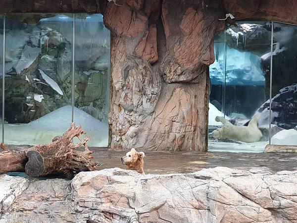 中國廣東省長隆海洋王國:北極熊館 (28).jpg