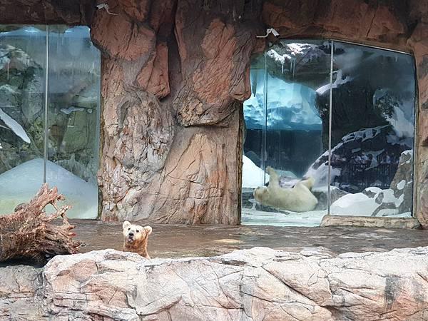 中國廣東省長隆海洋王國:北極熊館 (29).jpg