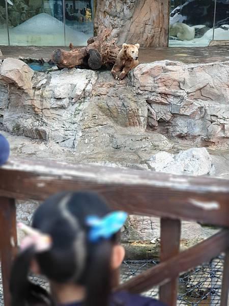 中國廣東省長隆海洋王國:北極熊館 (33).jpg