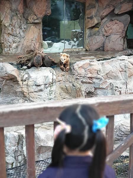 中國廣東省長隆海洋王國:北極熊館 (37).jpg