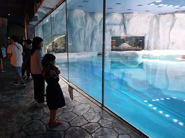 中國廣東省長隆海洋王國:北極熊館 (49).jpg