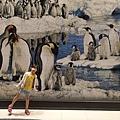 亞亞的企鵝酒店 (1).jpg