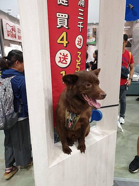 2019展昭台北寵物用品展 (22).jpg