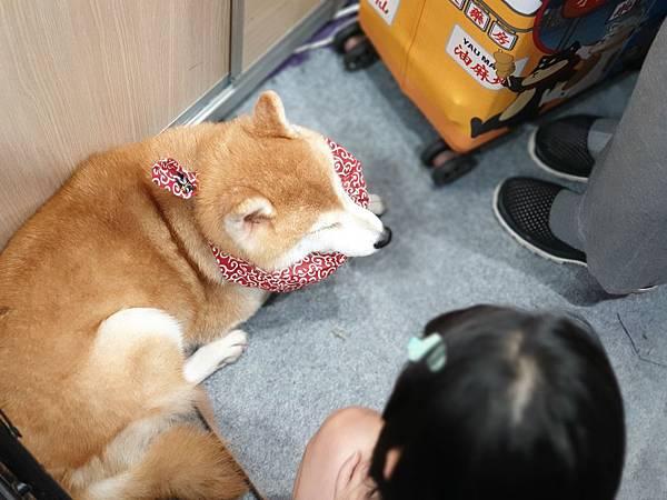 亞亞的寵物展交友 (3).jpg
